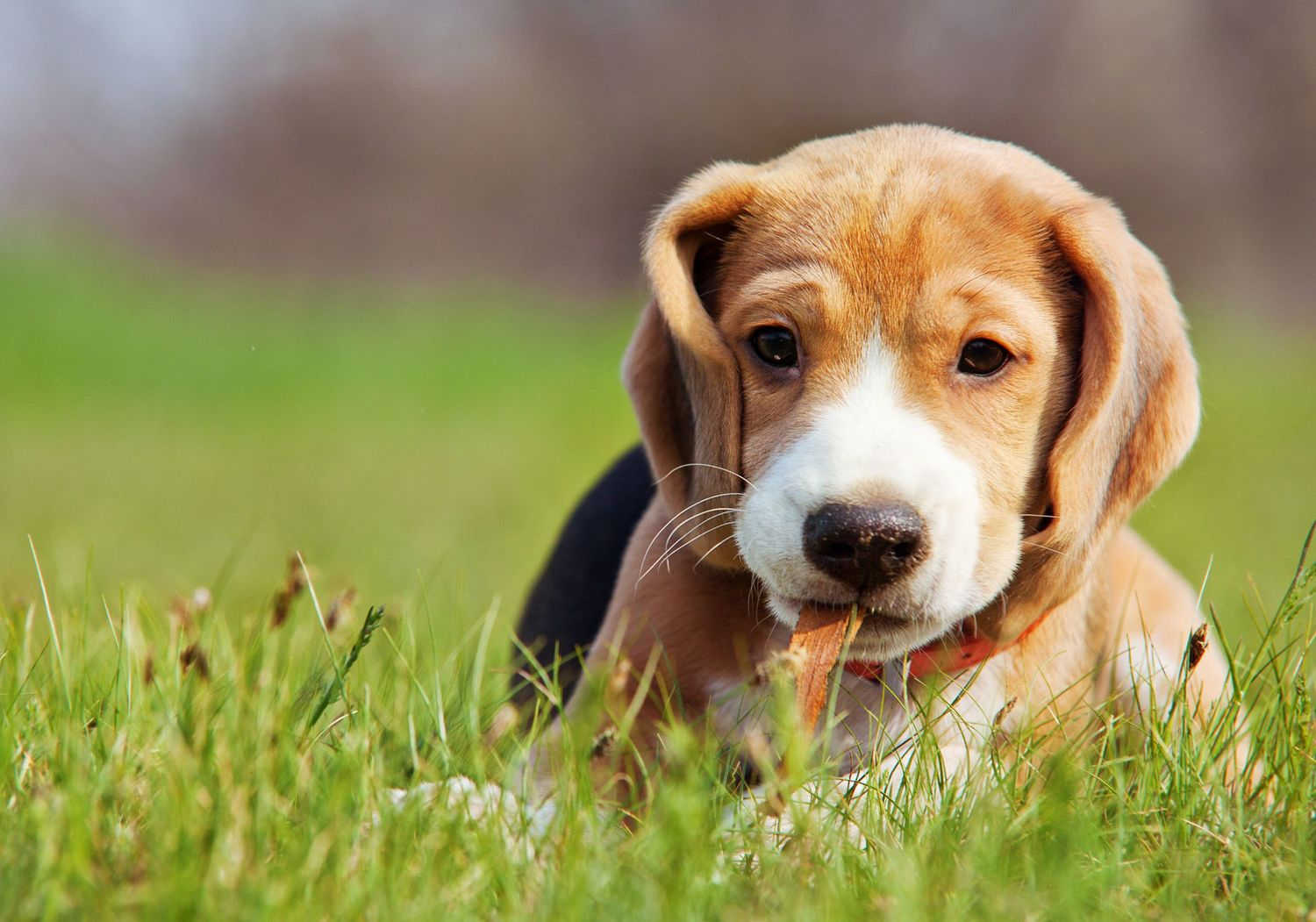 A Short Discussion on Low Cost Pet Insurance