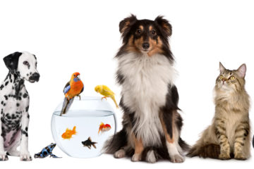 What You Have to Know About Pet Health Care Insurance