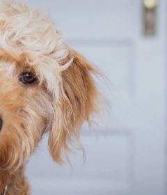 Why You Need Dog Liability Insurance